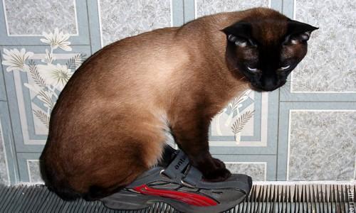 Кот греется на батарее, а так как та слишком горяча, использует прокладку из кроссовка.